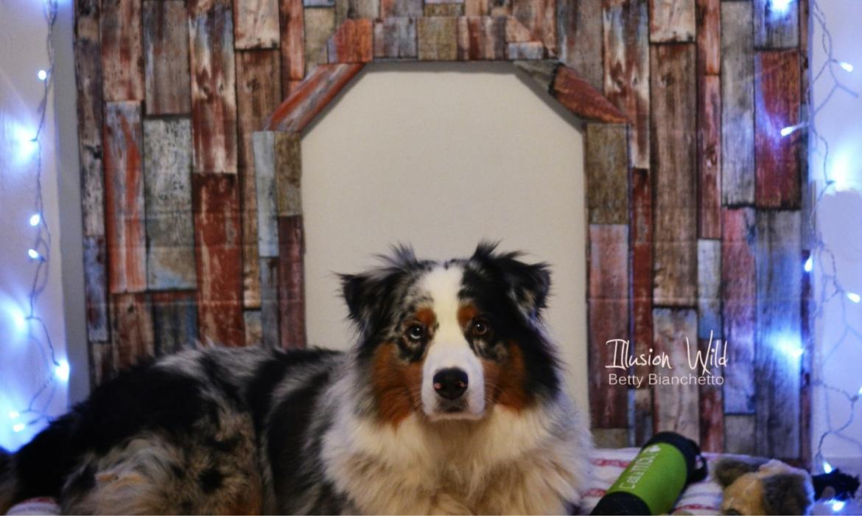 Comment fabriquer une niche pour chien d corative - Fabriquer panier pour chien ...