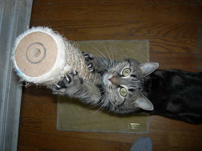 Faire un arbre chat cuest la solution idale si votre chat - Griffoir chat fait maison ...