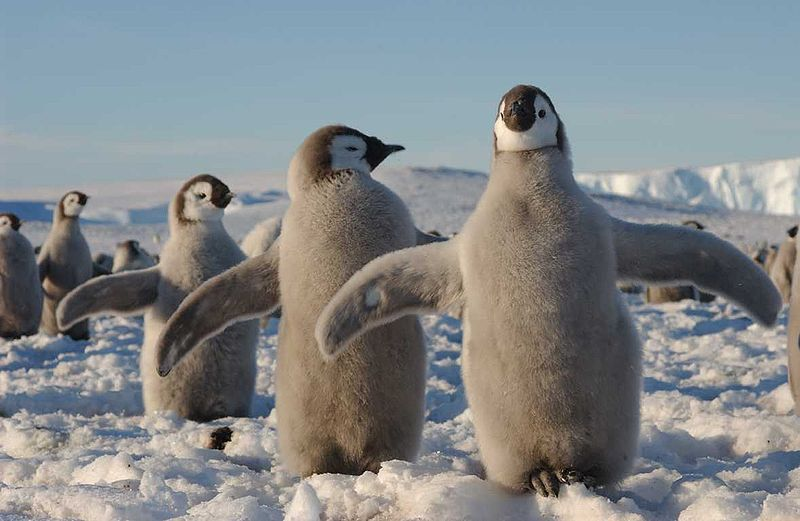 Connaissez vous bien les animaux polaires wanimobuzz - Animaux pole nord ...