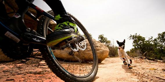 Bike-jöring