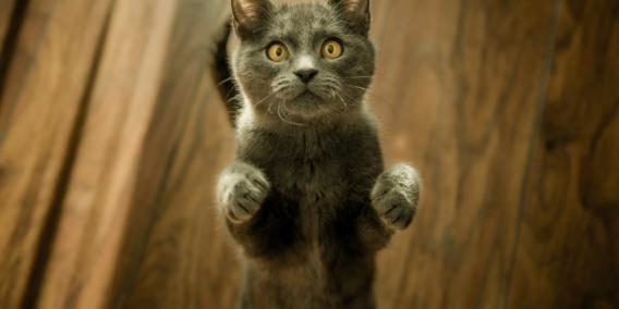 Ce chat fait le beau