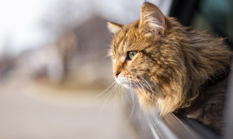 Les chat etrangers avec Chat avec