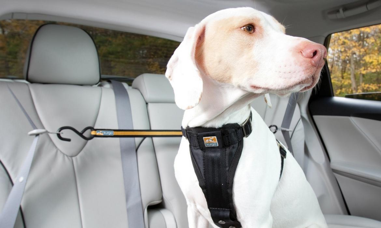 comment s curiser son chien en voiture wanimobuzz. Black Bedroom Furniture Sets. Home Design Ideas