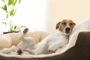 chien qui dort dans sa panière